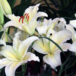 CUBO_fiori due